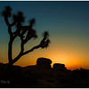Joshua Tree Nat'l Park :